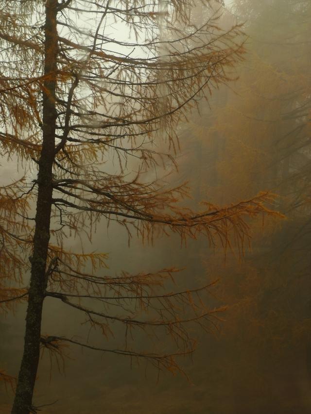 Boschi d'autunno (vikingandre.com)