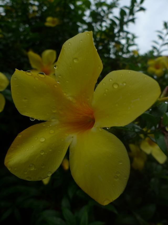 Natura tropicale in Cambogia (vikingandre.com)