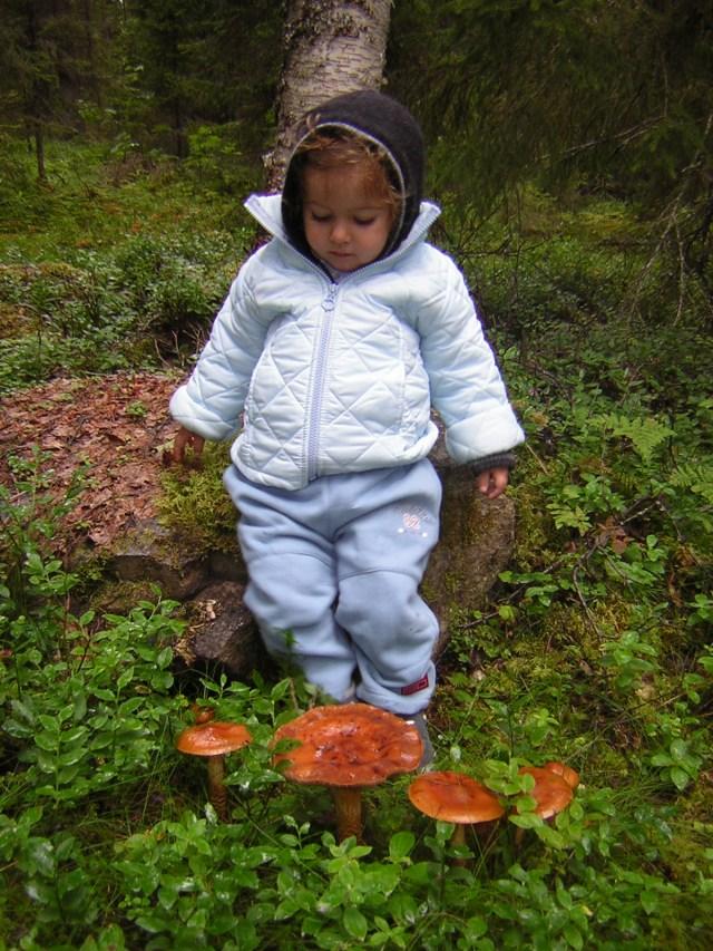 Funghetti del bosco (vikingandre.com)