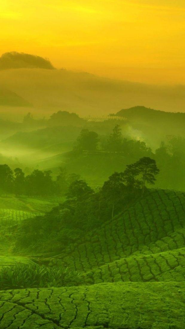 Malaysia, piantagioni di tè (Pinterest)
