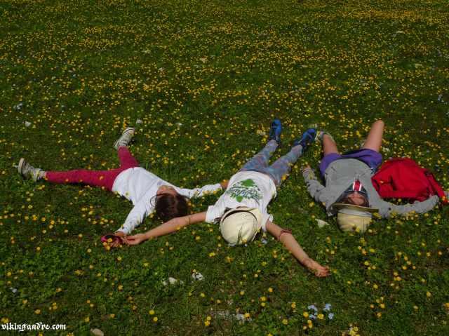 Relax tra i fiori alpini (vikingandre.com)